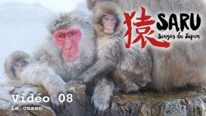 Saru-vidéo-08-Le-onsen-des-singes