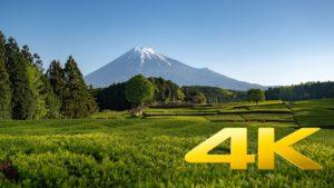 Obuchi-Sasaba-and-Mt.-Fuji-Shizuoka-大淵笹場-4K-Ultra-HD