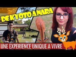 Du temple d'or à Nara – Une expérience unique à vivre