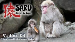 Saru-vidéo-04-Les-conflits-avec-Kaba